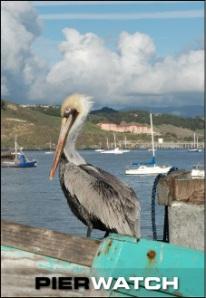 Port San Luis Harford Pier